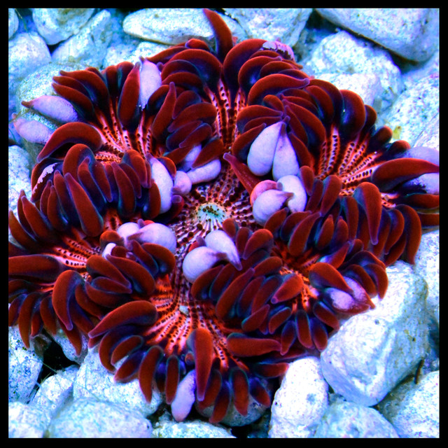 Red-Orange-and-Blue-Rock