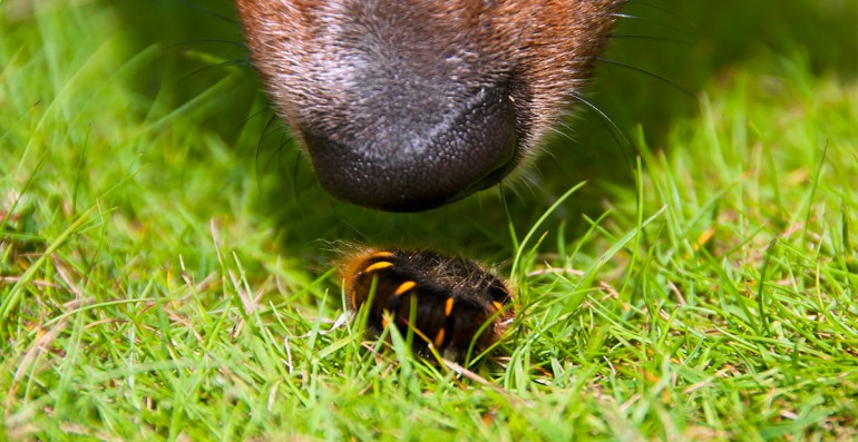 THE DANGER OF CATERPILLARS: TIPS TO PROTECT YOUR DOG