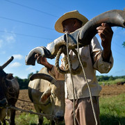 22160936-7785767-A-farmer-holds-a-oxen-harness-used-to-pull-the-plough-as-he-work-a-43-1576170216509