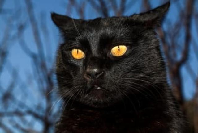 кошка со светящимися глазами