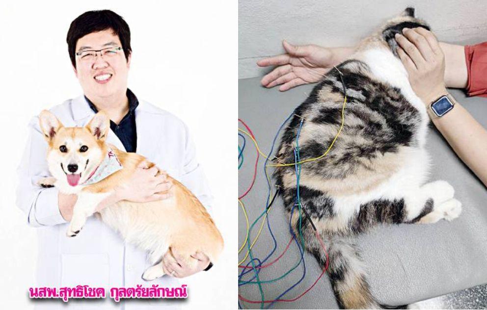 ยากระตุ้นประสาทแมว,แพทย์ทางเลือกสำหรับสุนัข,ยากระตุ้นปลายประสาทสุนัข