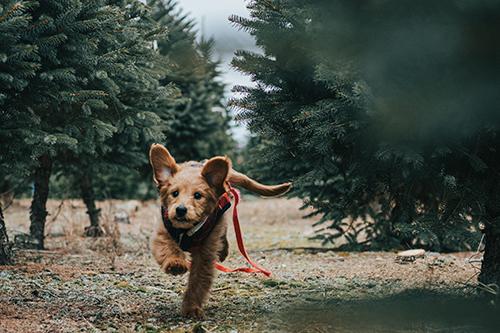 cachorro-filhote-pet-comportamento