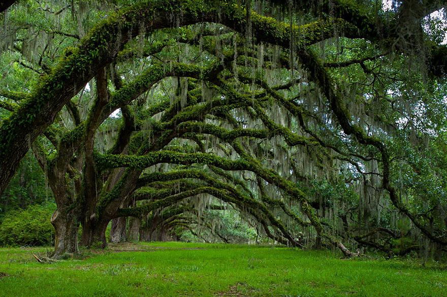 Дубовая аллея на плантации Дикси в Южной Каролине-17