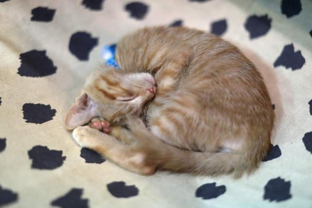 Depressionen bei Katzen