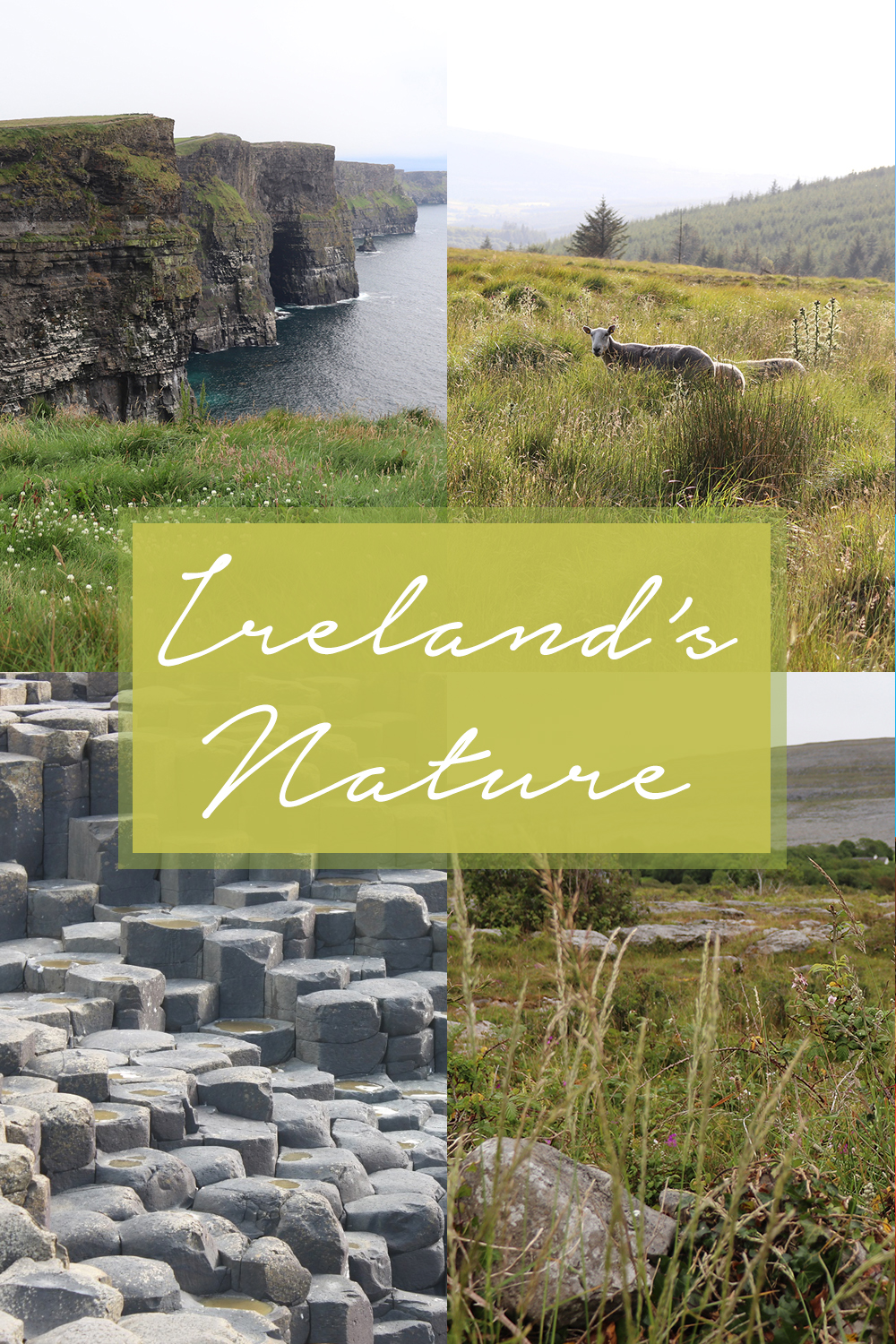 Seeing Some of Ireland's Nature