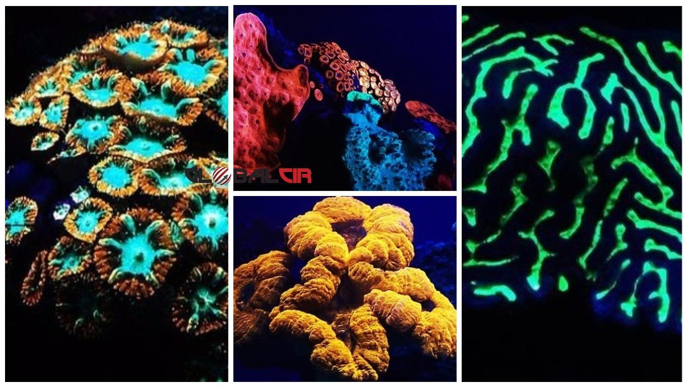 Podvodna čuda u Crvenom moru: Korali koji svijetle u duginim bojama…