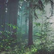 img-woods