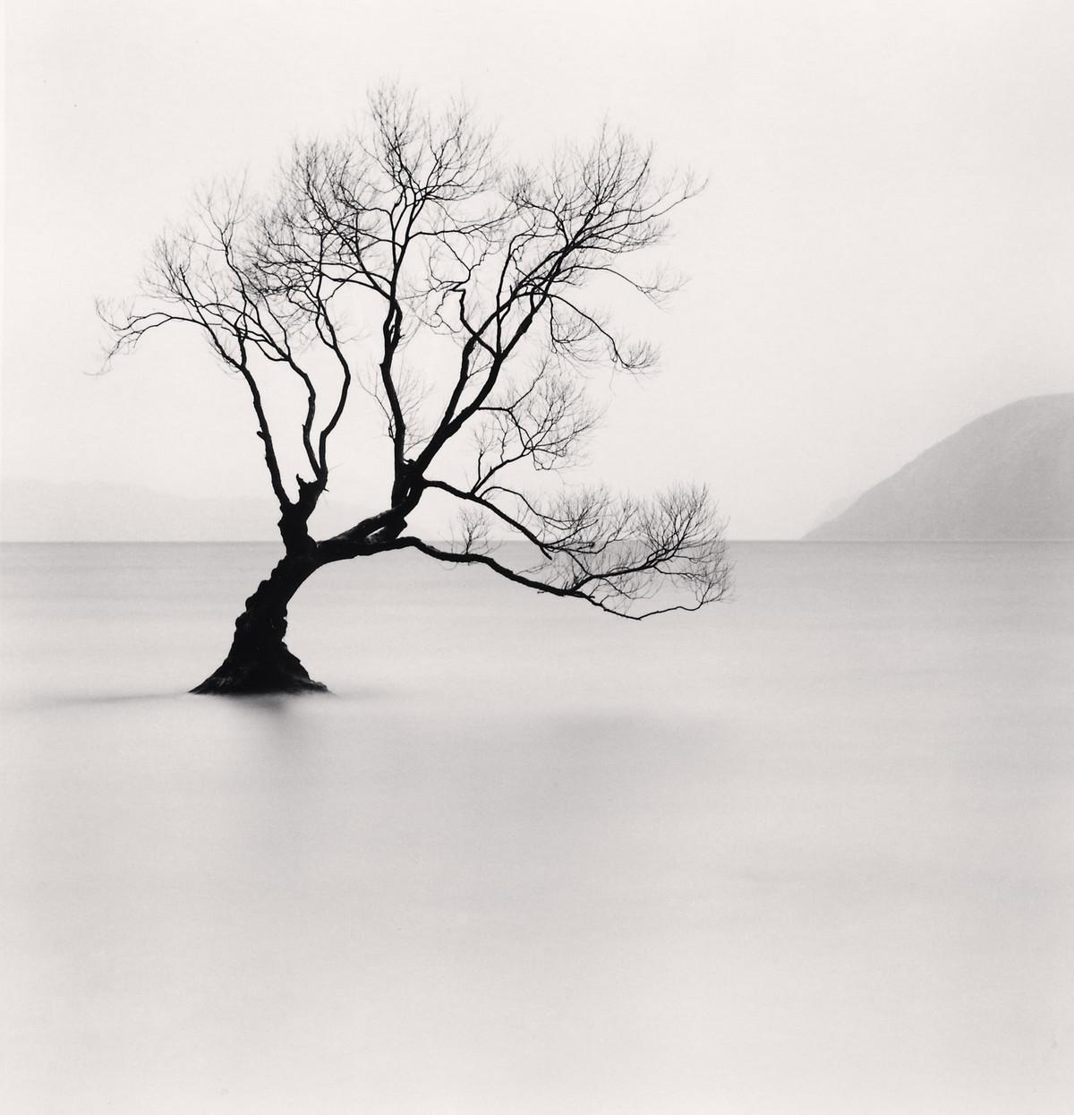 Портреты деревьев Майкла Кенны 9