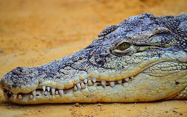 e4a19a9b2c-100819-crocodile-alligator-difference