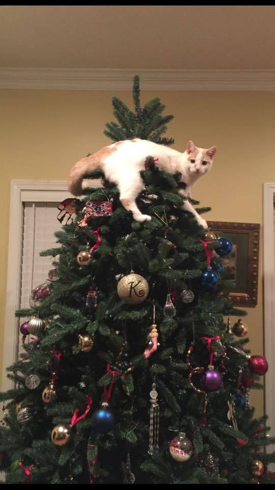 聖誕樹長貓系列,不會長出貓咪的聖誕樹不是一棵好聖誕樹 9