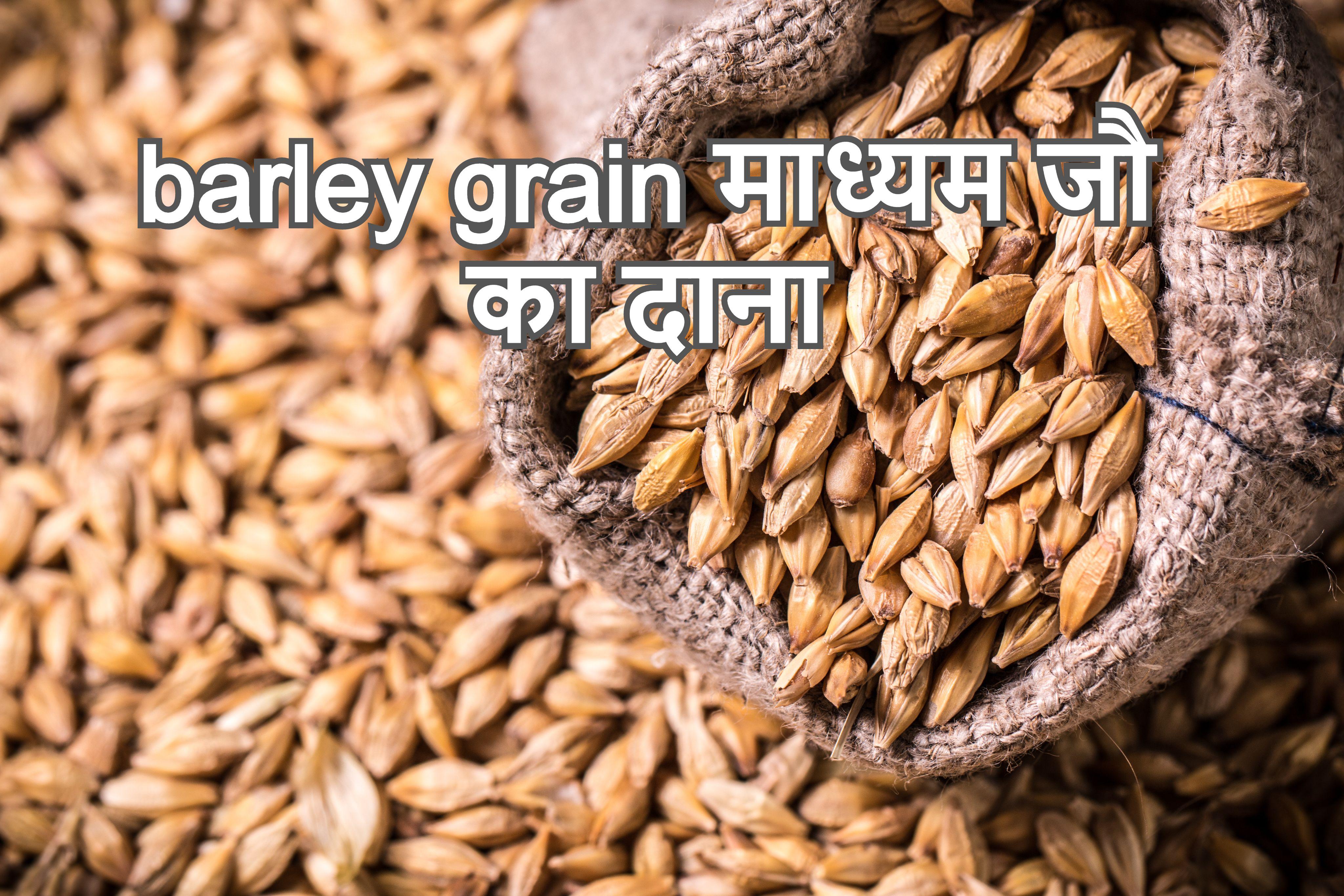 जो के साइड इफेक्ट्स और सुरक्षा [Barley's side effects and safety