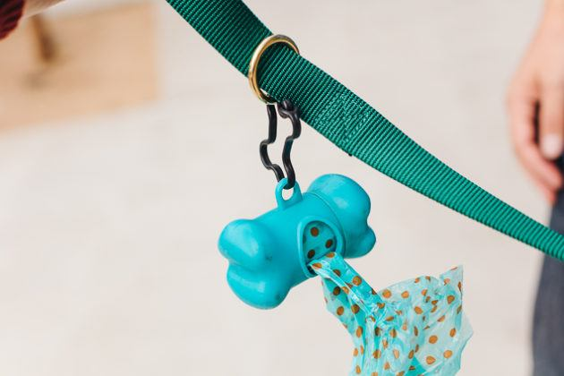 Know the Tips for Choosing the Right Dog Leash