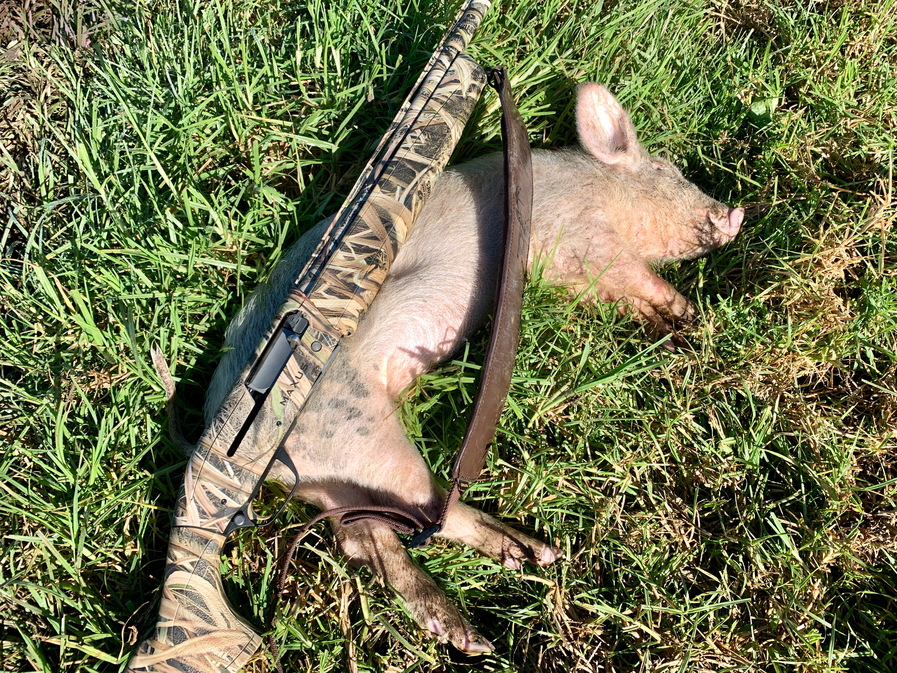 Hunting-Pig1.jpg