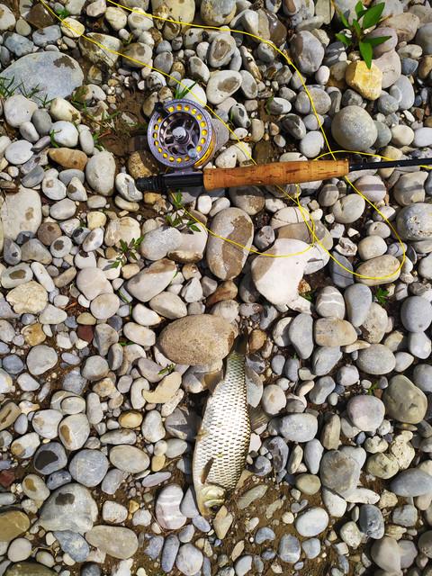 Mušičarenje klena na Skadarskom jezeru IMG-20200503-154423
