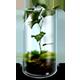 https://i.ibb.co/31K8X8T/Mossy-Terrarium-icon.png
