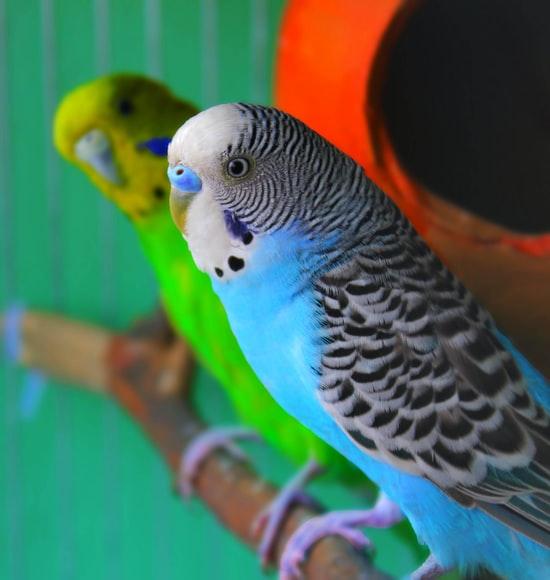 Best Birds To Keep When You're a Beginner