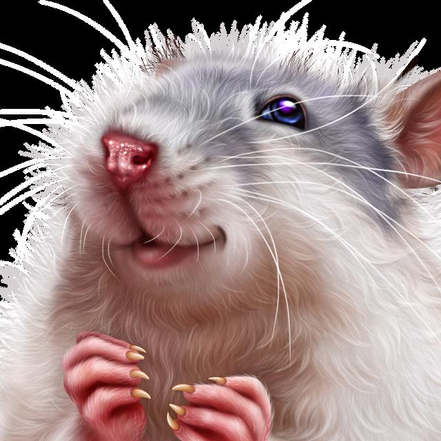 leprechaun-rat-15.png