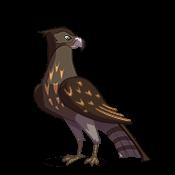 sidekick-season-hawk-1.png