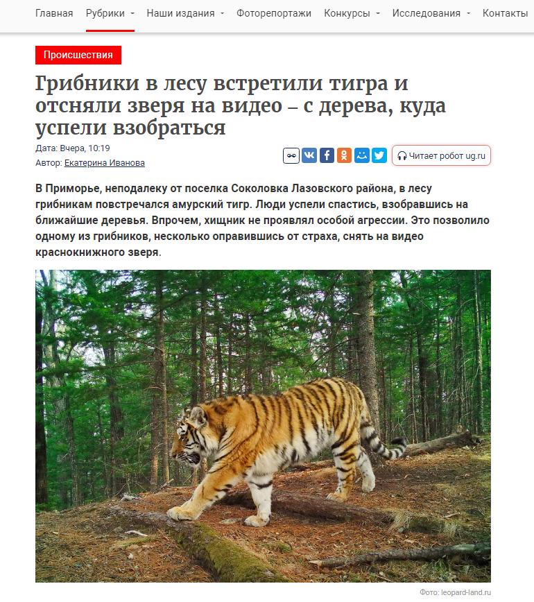 https://i.ibb.co/3BMmyy7/tigr10.png