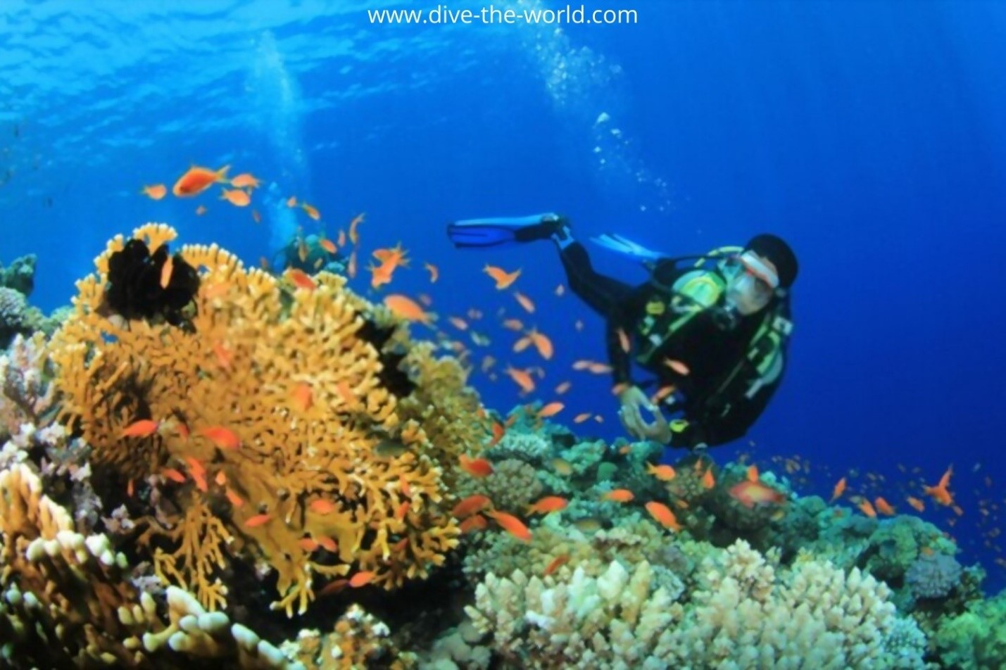 Best Economic Scuba Diving Destinations in the World