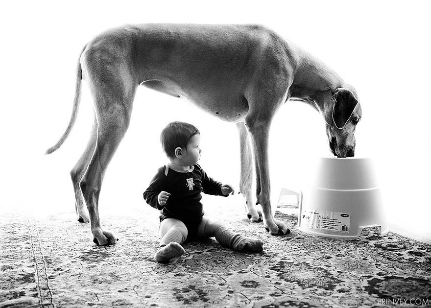 Когда собаки большие, а дети маленькие - 44 потрясающие фотографии - 31