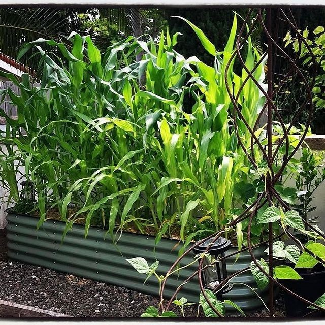 Is It Advisable To Grow Plants On Raised Garden Beds?