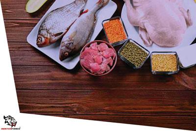 Compreendendo a proteína, expondo suas vertentes e seus benefícios