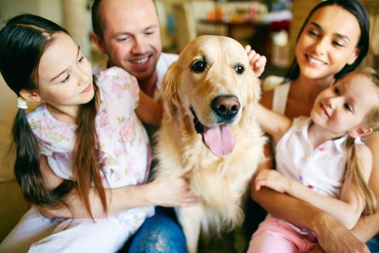 Dog repellants