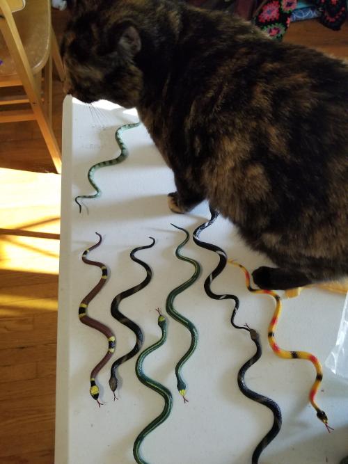 tablesnake
