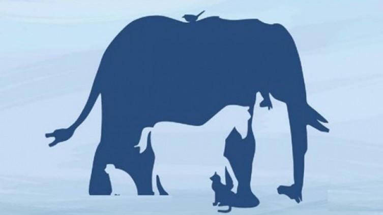 Mnogi su u dilemi: Koliko životinja vidite na slici?