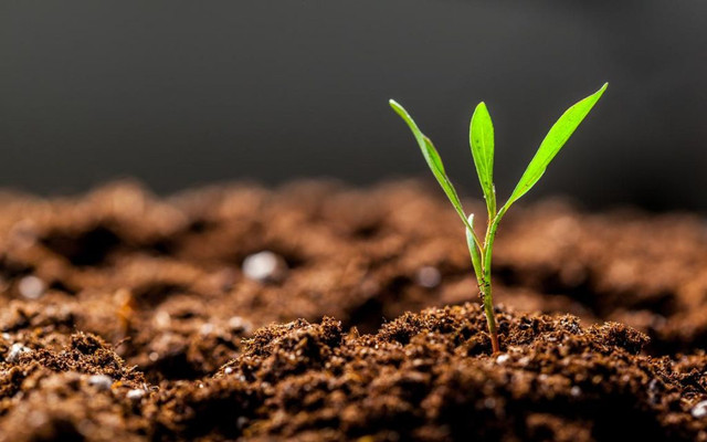 Restoring Soil Fertility with Organic Materials