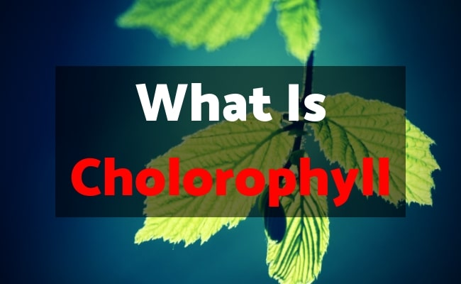 What is chlorophyll? The health benefits of using chlorophyll. Introduction - #chlorophyll #nutraxyst
