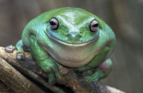 30 фотографий самых счастливых животных на планете-13