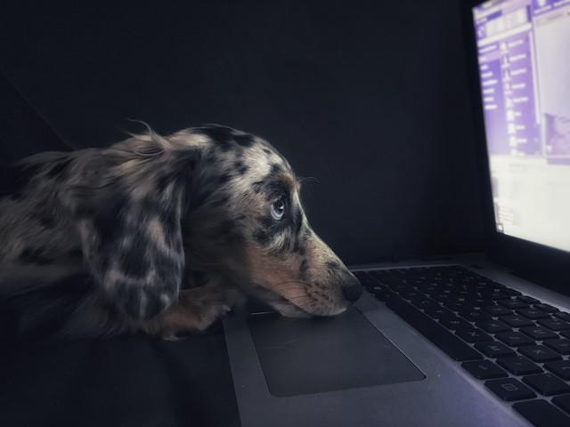 Pet Working