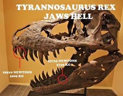 [Image: t-rex-skull.jpg]