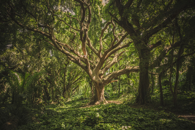 nature-forest-trees-park-38136