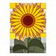 https://i.ibb.co/3f4rdPw/sun-flower.png