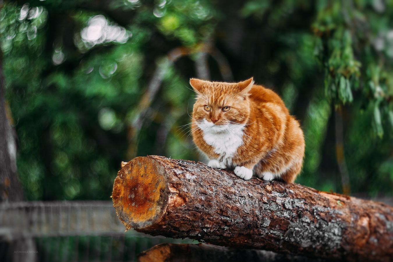 Назаборные коты / фотограф Афиногенова Татьяна