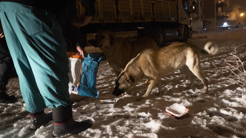 07-01-2020-sokak-hayvanlari-besleme-3