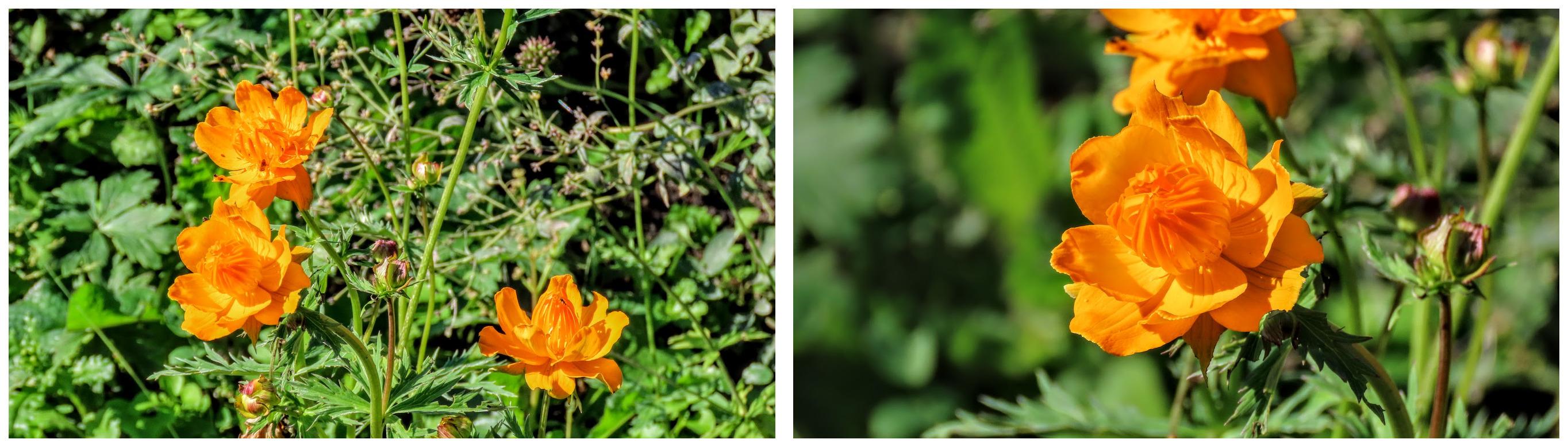 imgonline-com-ua-Collage-d-N4-FE6-LZk0q