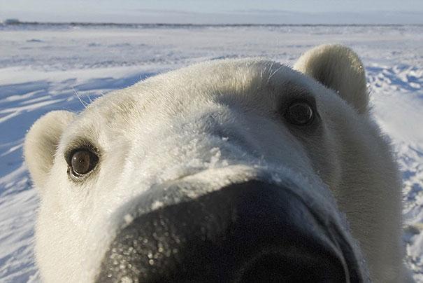 Медведи, такие медведи-23
