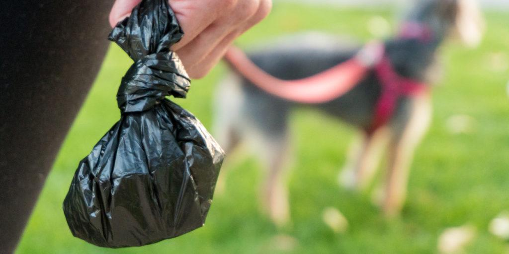 Dog Poop Bags: Types, Consideration and Recommendations