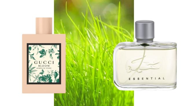 Зеленые ароматы