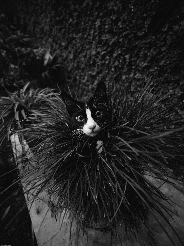 Таинственная кошачья жизнь в чёрно-белых фотографиях-20