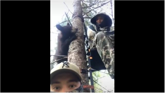 熊:嘿,你們在樹上幹嘛? Image