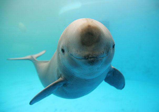30 фотографий самых счастливых животных на планете-35