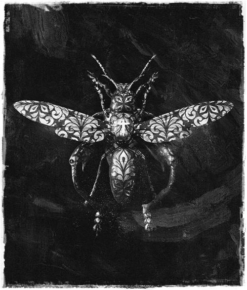 https://i.ibb.co/3zGZsDm/Billelis-VS-headless-horse-insect.jpg