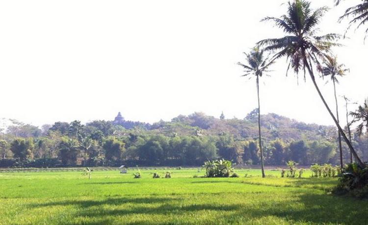 Desa Borobudur