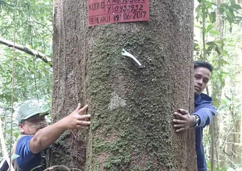 33637161599-pohon-asuh