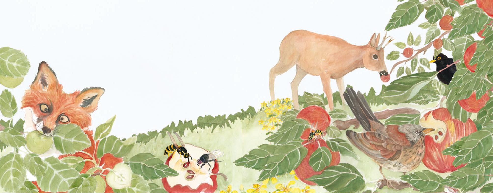 Bild aus dem Buch Lebendige Samen